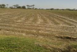 الجفاف يأكل أراضي «القرامطة» في سوهاج