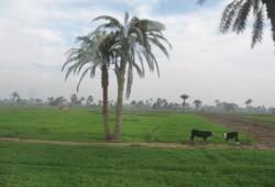 رسائل استغاثة من أهالي قرية بالفيوم للتصدي للصوص أراضي الدولة