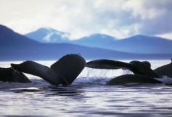 أشعب والحيتان