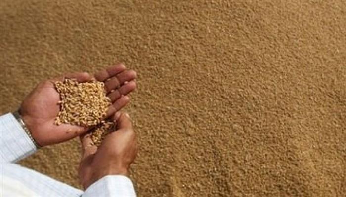 خبراء: ثورة القمح على الأبواب!