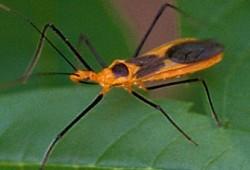 حكم قتل الحشرات الضارة