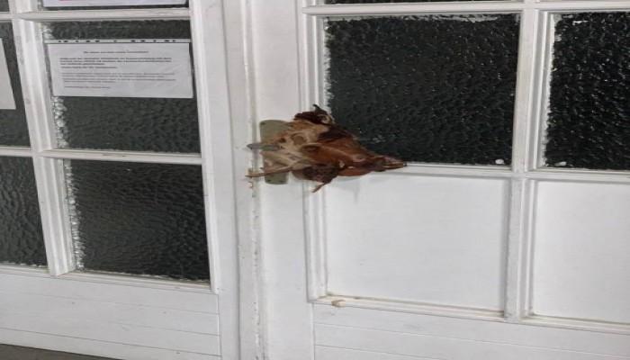 في تصرف إرهابي.. تعليق رأس خنزير على باب مسجد في ألمانيا