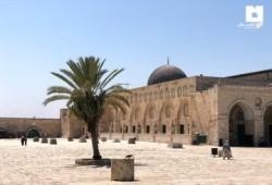 """علماء فلسطين: (2257) من الهمج الصهاينة اقتحموا """"الأقصى"""" خلال أغسطس"""