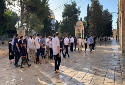 فلسطين المحتلة|  اقتحام الأقصى واعتقالات واقتحامات بالضفة وإصابة عمال باختناقات