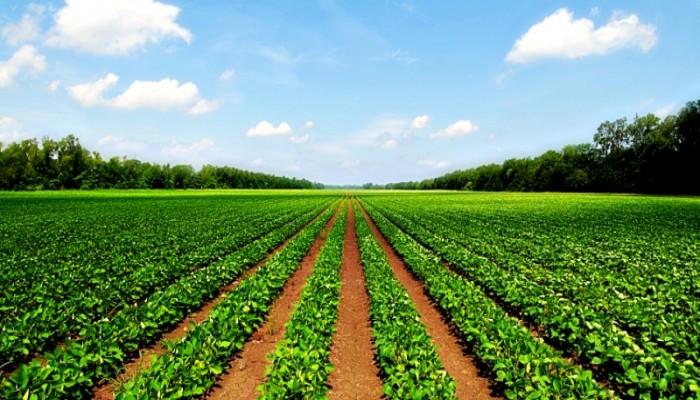 الانقلاب يقرر تحويل الأراضي الزراعية للمراكز البحثية إلى مشاريع سكنية
